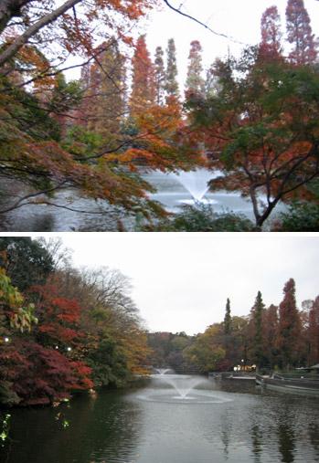 秋めいた井の頭公園