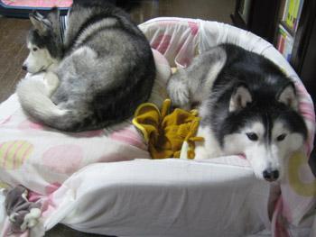 毛布とポトフ