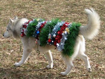 クリスマスツリー・ハスキー