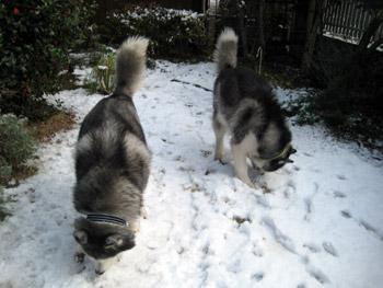 雪のお庭のおふたりさん