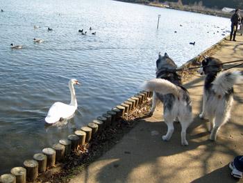湖畔散歩は大興奮