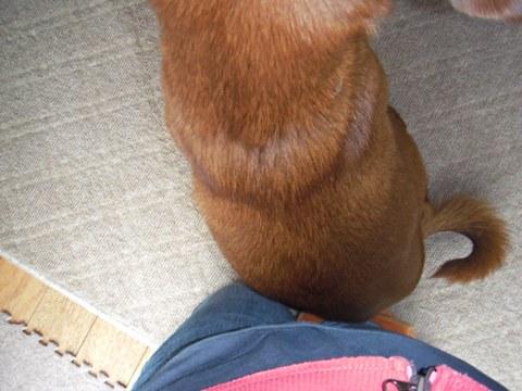 くる を 犬 て おしり つけ 犬が頭を押し付けてくる・体をくっつけてくる理由は信頼の証!足のあいだに入るのはNGってほんと?