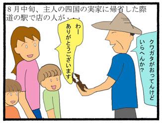 ミヤマクワガタ01
