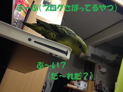 201204111.jpg