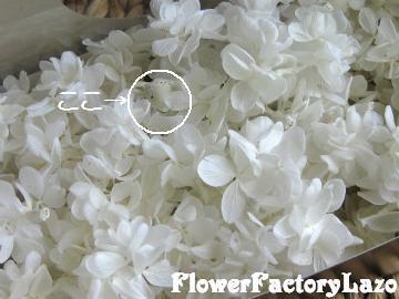 018+(2)_convert_20120208130540.jpg