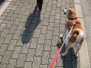 いっしょに散歩!