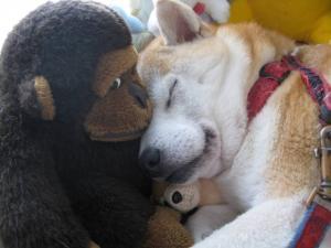 仲がいいというより枕にすぎない?