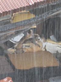 雨でも平気
