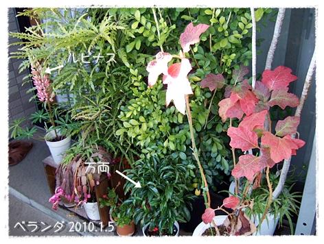 20100105-01.jpg