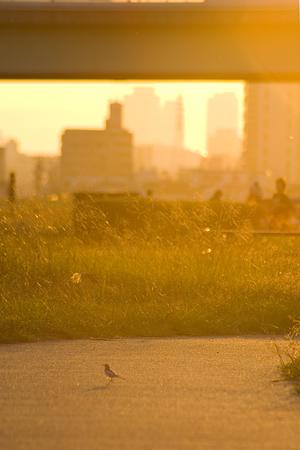 河原の空風景-9