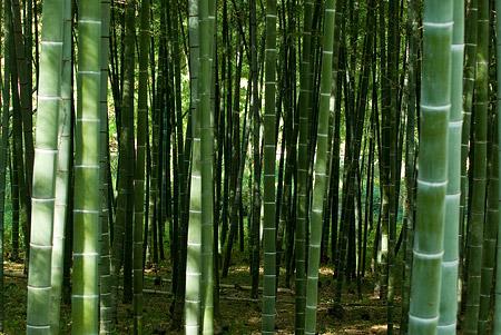 森林公園2-2