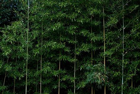 森林公園2-3