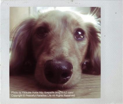 うちの犬(ミッキー)