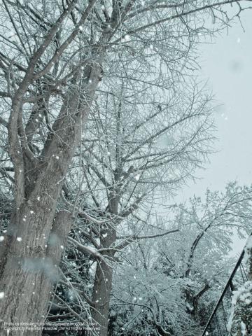 雪が降る町、岡津町 8