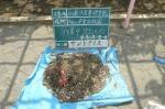 砂場のごみ 小石 プラスチック